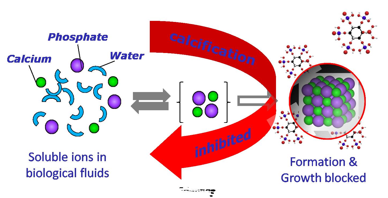 mecanism-action